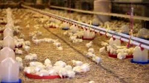مرغ ارزان شد/ هر کیلو ۱۱ هزار و ۵۰۰ تومان