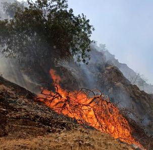 جنگل های گچساران دوباره طعمه حریق شدند
