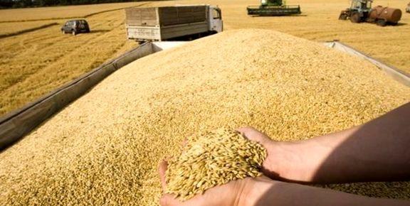 نرخ خرید تضمینی گندم در سال جدید چقدر است؟