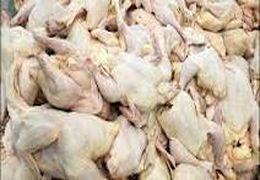 وزیر جهاد کشاورزی: بزودی قیمت مرغ کاهش پیدا خواهد کرد