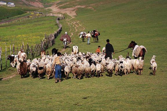 طرح خرید تضمینی دام عشایر و روستاییان ابلاغ شد
