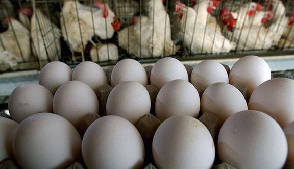 آرامش بازار مرغ و تخم مرغ در گرو حذف ارز دولتی