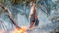 وزش شدید باد گرم موجب آتشسوزی در اراضی جنگلی گیلان شد