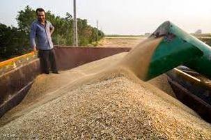 ایجاد فساد در گندم و عدم شفافیت آن جرم سنگینی به حساب می آید