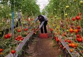 بهرهبرداری از حدود ۵ هزار میلیارد تومان طرح کشاورزی