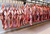 ۵۰ هزار راس گوسفند تا پایان هفته وارد کشور میشود/ هر کیلو مرغ  ۱۱ هزار و ۵۰۰ تومان