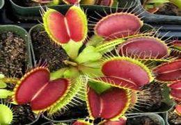 گیاهی که حشرات را شکار می کند