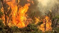 آتش سوزی در جنگل های چالوس/۱.۵ هکتار سوخت