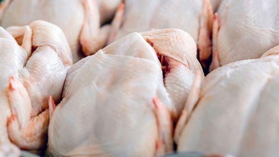 آغاز توزیع مرغ 18 هزار و 500 تومانی در بازار